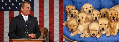 John Boehner - Golden Retriever Puppies