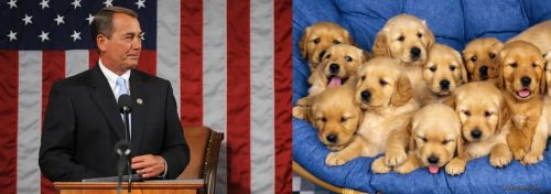 John Boehner - Golden Retriever Puppies