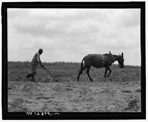 Plow - Dorothea Lange